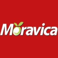 MORAVICA DOO ARILJE
