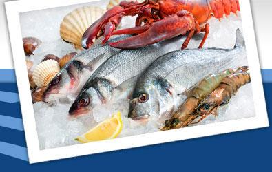 Fratelo Trade doo Sveža morska riba i plodovi mora