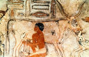 Istorija sira: Sirevi koje su jeli stari Egipćani, Grci i Rimljani