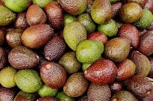 Zašto treba jesti avokado?