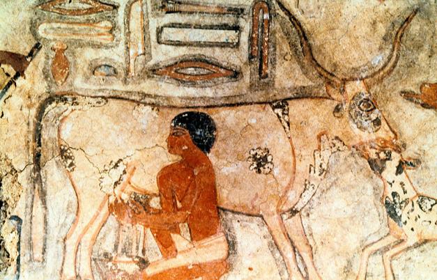egipatski crtez iz grobnice na kome je prikazan stari egipcanin kako muze kravu