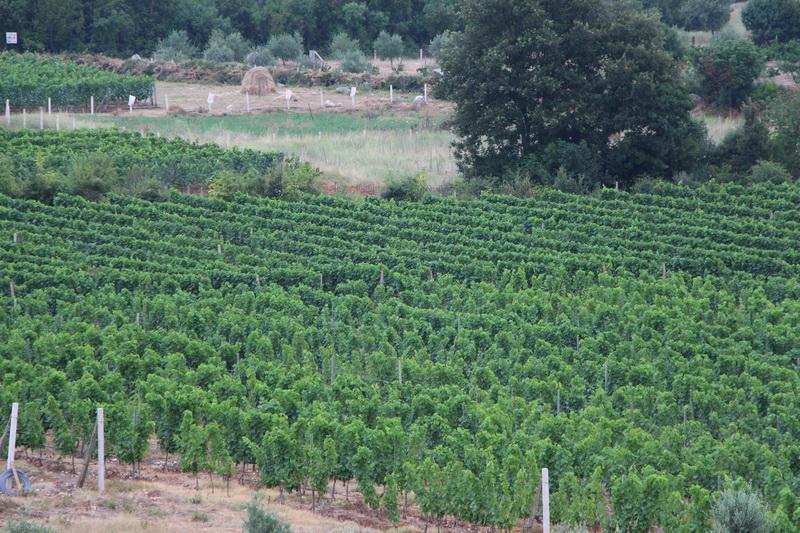 Proizvodnja vinainogradi vinarije Milović Briska gora Ulcinj