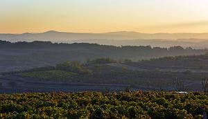 vinogradi_temetov_breg