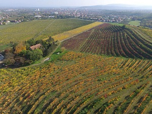 vinogradi_vinarije_piano